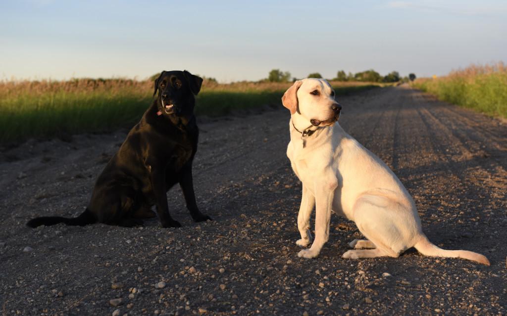 Bella and Radar