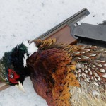 Hunting Late Season Pheasants