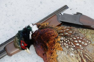 Rooster and Gun