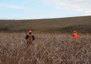 pheasant habitat - cattails