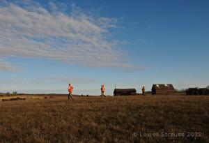 pheasant habitat - old farm site