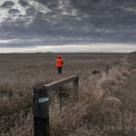 The Friday 5: Top Reasons for Hunting Pheasants