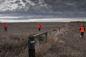 pheasant habitat - weedy fenceline